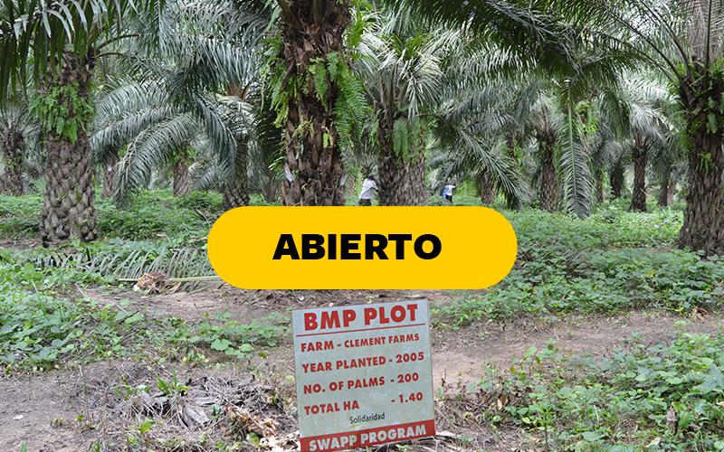 certificaciones sostenibilidad palma